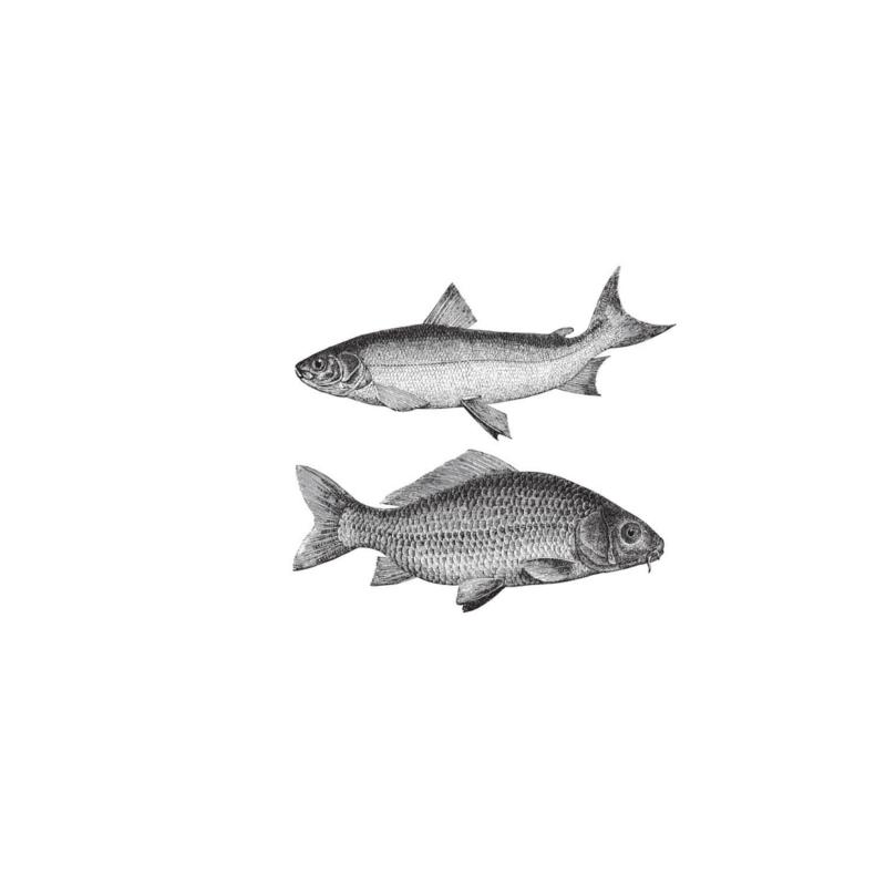 Day Boat Fish